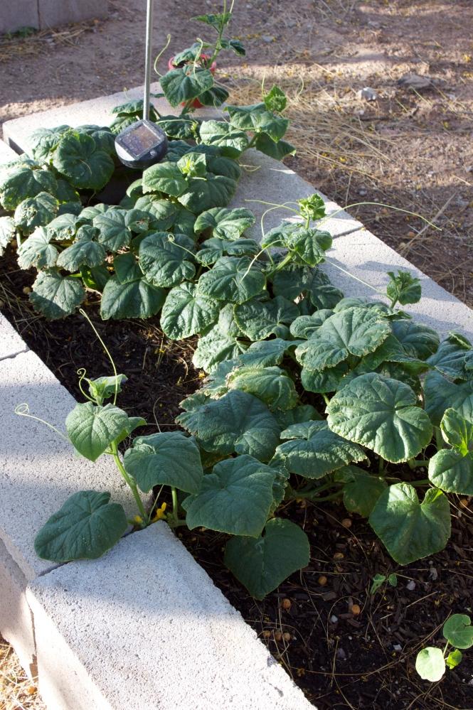 Our Garden (3/6)